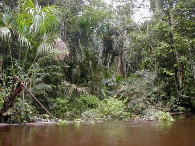 selva_jungle_bos5