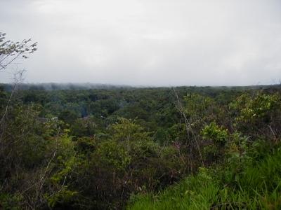 selva_jungle_bos10