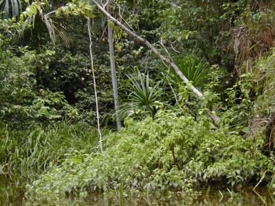 selva_jungle_bos6